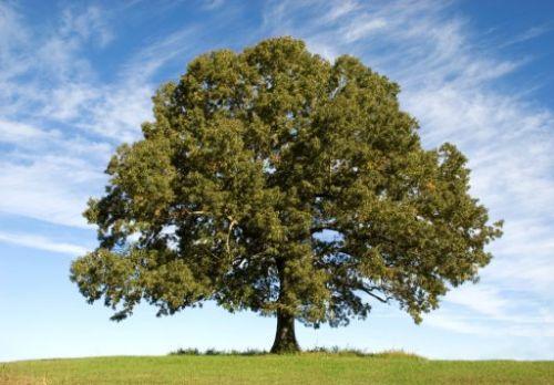 Een boom voor elk huishouden | Martijn Kortleven