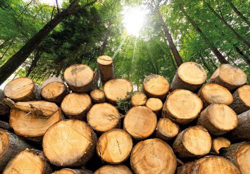 Luchtkwaliteit, houtkachels en biomassa | Lambert den Dekker