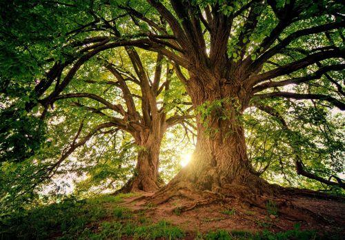 Schriftelijke vragen over bomenkap Oude Dreef 6, Noordpunt Triangel | Martijn Kortleven
