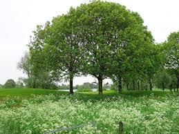 Bomen, een veelbesproken onderwerp | Kees de Jong