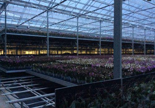 Regiowerkbezoek glastuinbouw | Peter van den Berg 2