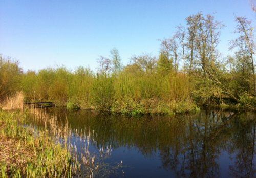 Van idyllenveldje en ruigtekruiden naar de smul- en heemtuin | Peter van den Berg 2