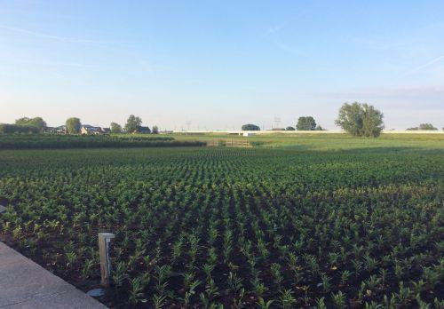 Greenportontwikkelingen: duurzaamheid, innovatie, transformatie en infrastructuur 1