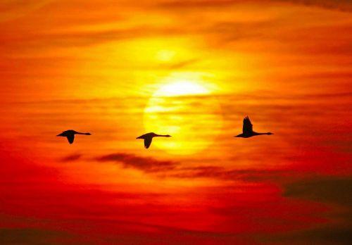Oranje zwanen ('lichthinder') en betrouwbare overheid | Peter van den Berg